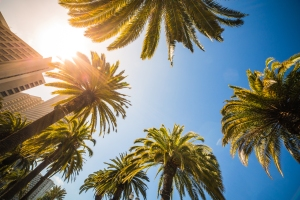 sunny-bottom-view-of-high-tropical-palms-picjumbo-com